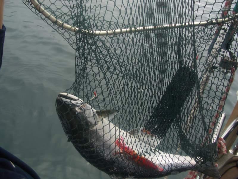 фото разновидностей сетей для ловли рыбы