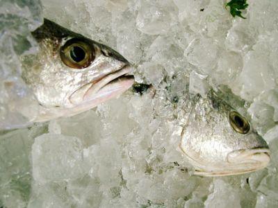 В холодильнике рыбодобывающего предприятия обнаружены 350 кг давно просроченной рыбопродукции