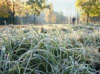Заморозки ожидаются в Вологодской области 1 сентября