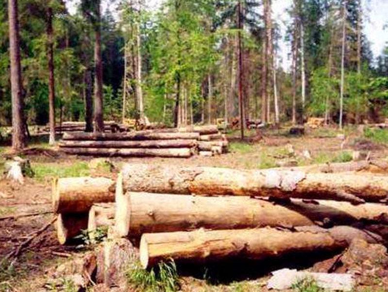 Карельские защитники природы создали первую в России публичную карту-схему арендаторов лесного фонда региона.