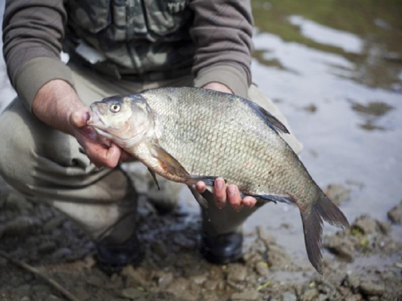 рыбалка весной в вологодской обл видео бесплатно