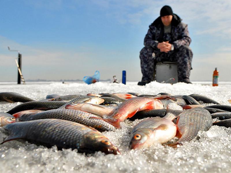 квоты на ловлю рыбы выдает