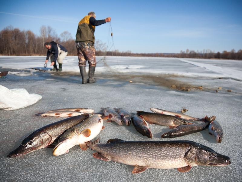запрет на рыбалку в 2017 году в костроме