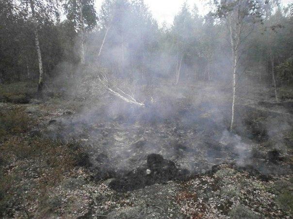 Вологодским спасателям потребовалось две недели для ликвидации крупного торфяного пожара