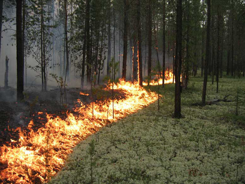 Завыходные вКировской области произошли три лесных пожара