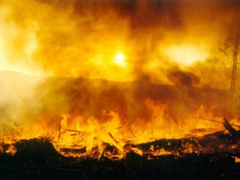 Влесных пожарах сгорели 8 млн руб.