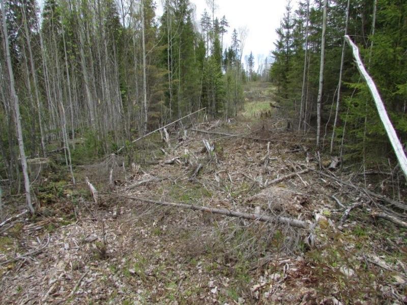 Гражданин Великоустюгского района уничтожил гусеницами трактора неменее 200 молодых деревьев