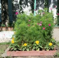 Праздник цветов в Вологде завершит мероприятия проекта «Цветущий город»